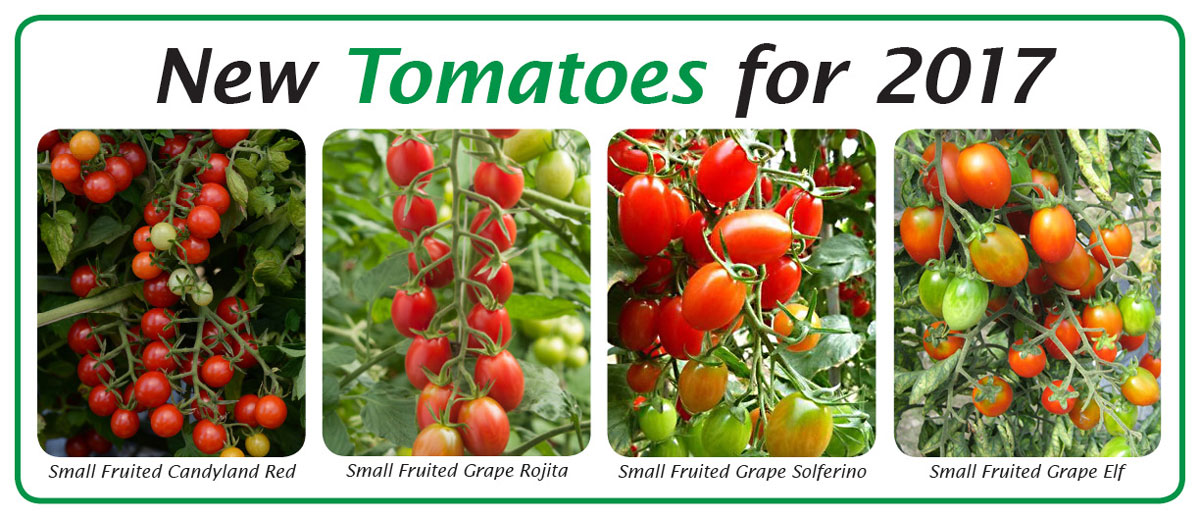 New Tomatoes for 2017