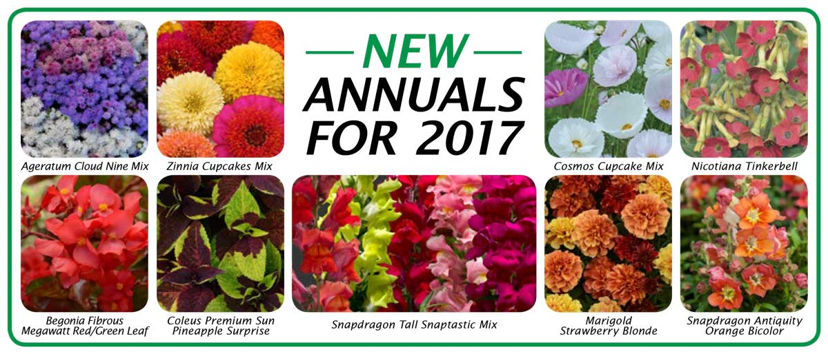 2017 New Annuals