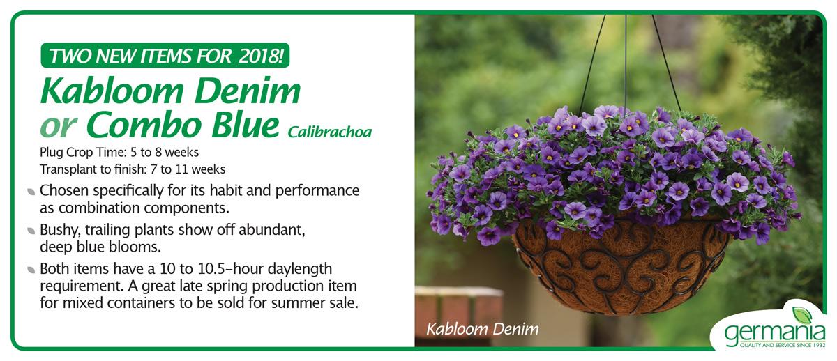 calibrachoa-combo-blue-and-denim-1200.jpg