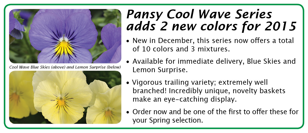 pansy cool wave 2015