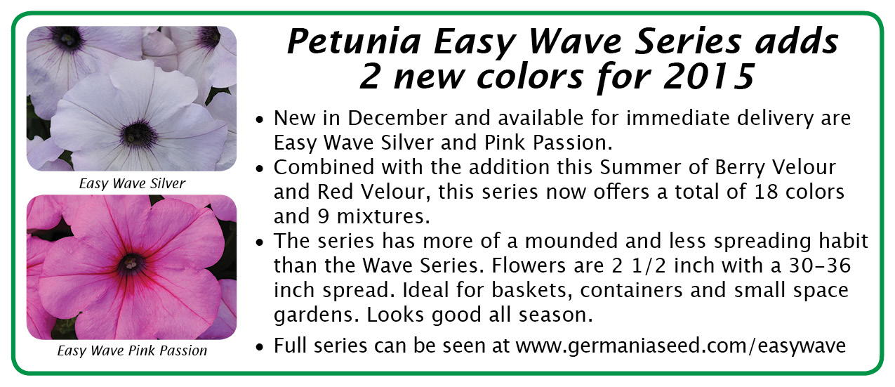 petunia easy wave 2015