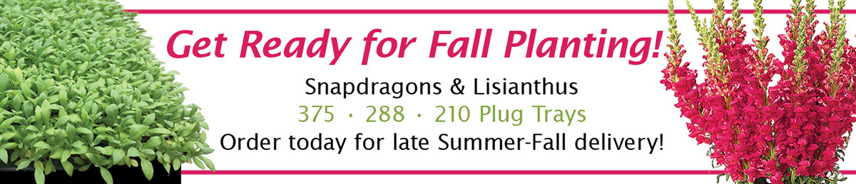 Fall Seeded Plugs