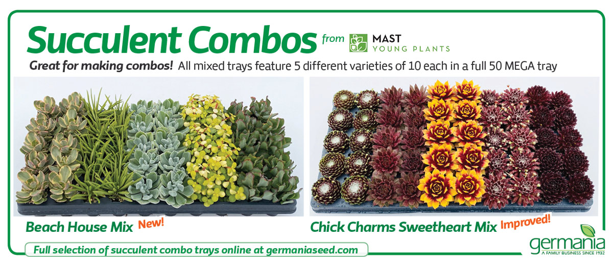 mast chick charms mix