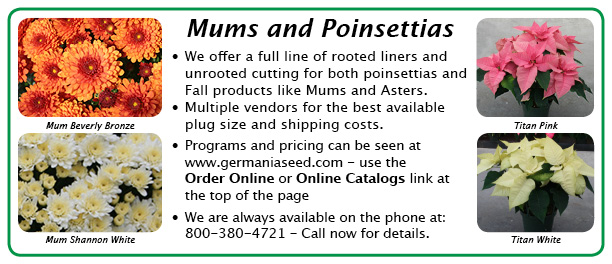 Mums and Points