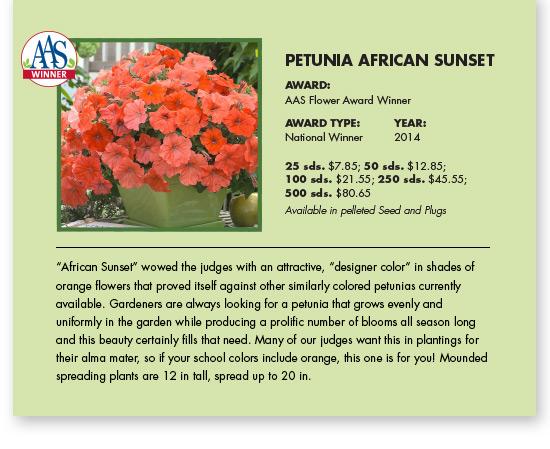 petunia_africansunset