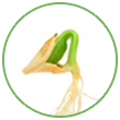 seed-icon.png
