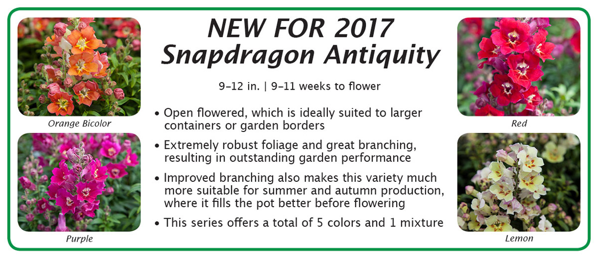 New For 2017 Snapdragon Antiquity