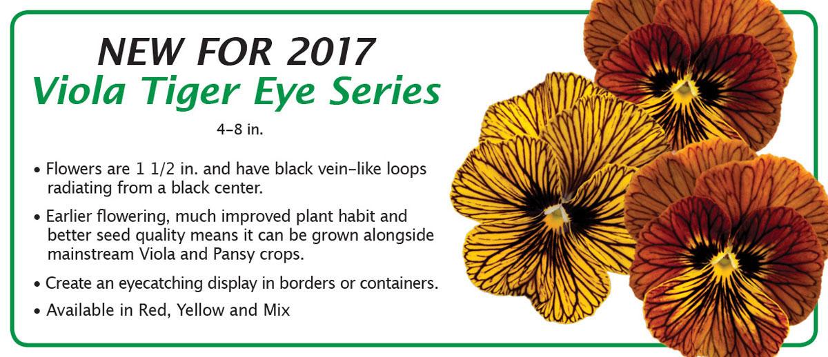 New for 2017 Viola Tiger Eye