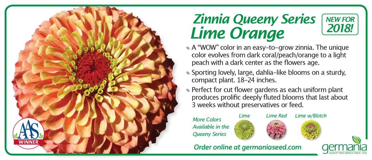 zinnia-queeny-lime-orange-1200